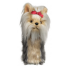 yorkshire_terrier.png